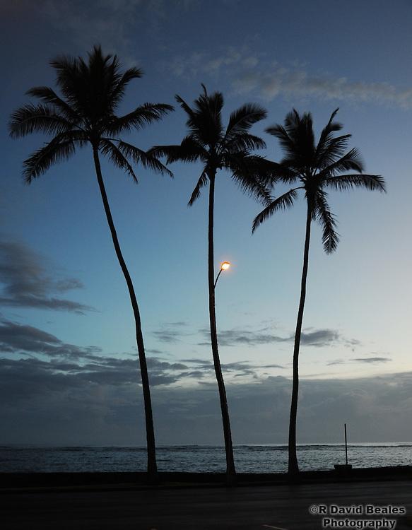 Palm Tree Street Light