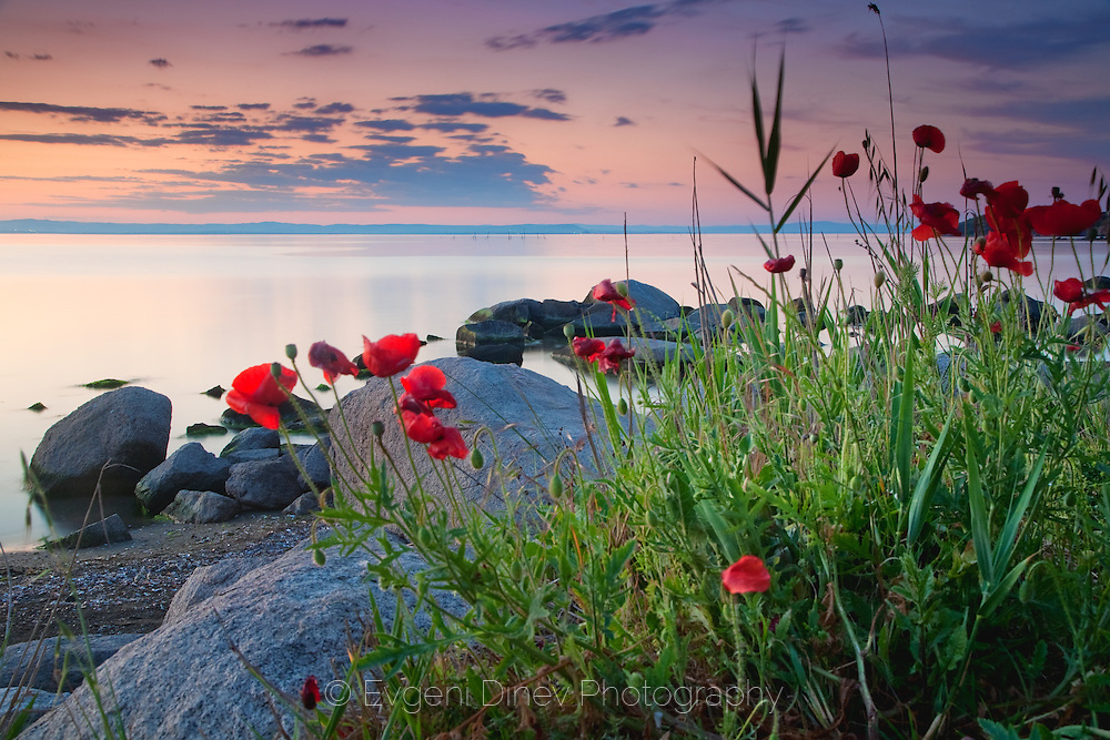 Stunning sea scene with poppies on the sea coast