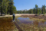 A backcountry trail is flooded over by spring snowmelt, Yosemite National Park
