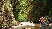 Redwood National Park, California, hiker, hiking