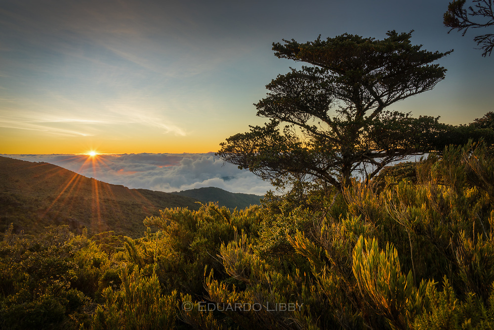 An Escallonia tree and Chusquea bamboo frame a sunset in the Costa Rican Paramo.