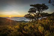 An Escallonia tree and Chusquea bamboo frame a sunset in the Costa Rican Paramo.