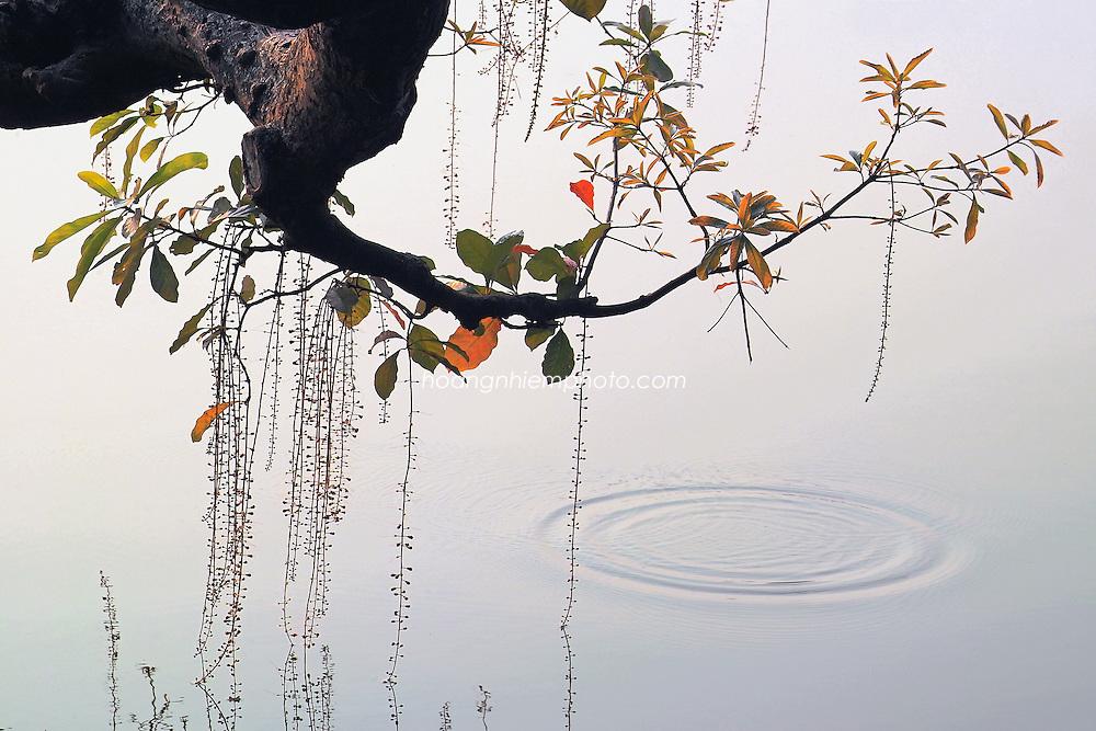 Vietnam Images-Nature-tree-Autumn-Ha Noi hoàng thế nhiệm