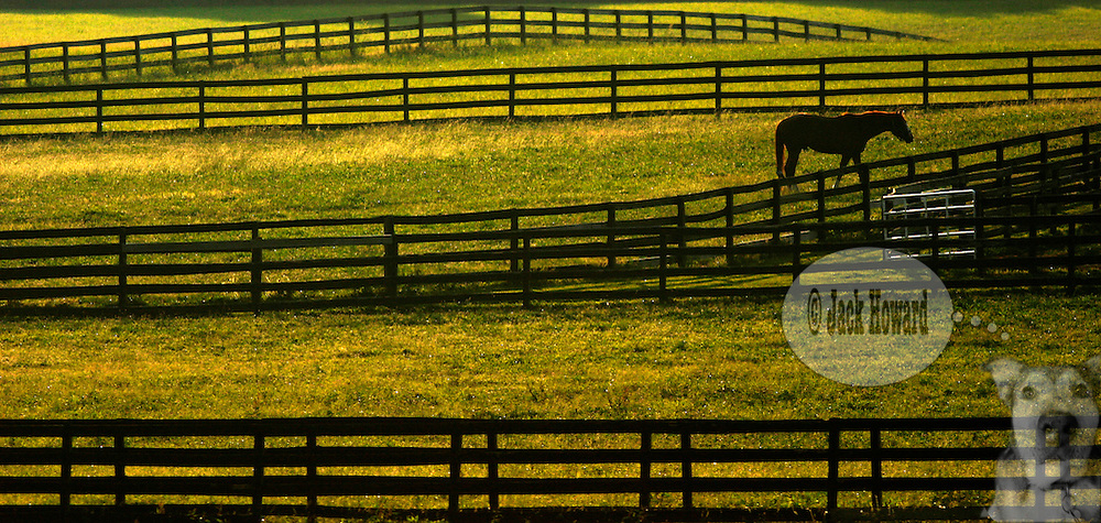06/2004 - Clarksburg NJ - A horse wanders a paddock in NJ horse country...Jack Howard photograph