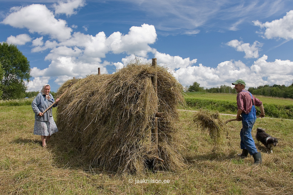 Man and Woman Working in a Field of Hay, Estonia, Europe