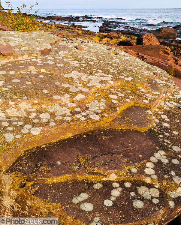 Lichen grows on bedrock along Lake Superior shoreline, in Porcupine Mountains Wilderness State Park, Michigan, USA.  Native Ojibwa people named the local mountains for their porcupine silhouette.