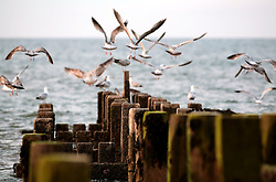 UK ENGLAND NORFOLK WALCOTT 20MAY07 - Seagulls at the beach in Walcott, north Norfolk coast...jre/Photo by Jiri Rezac..© Jiri Rezac 2007..Contact: +44 (0) 7050 110 417.Mobile:  +44 (0) 7801 337 683.Office:  +44 (0) 20 8968 9635..Email:   jiri@jirirezac.com.Web:    www.jirirezac.com..© All images Jiri Rezac 2007 - All rights reserved.