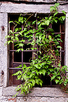 Ticino, Southern Switzerland. Moghegno.  An old, stone-framed window partly obscured by a creeping climber.