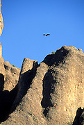 Turkey Vulture, Vulture, Turkey Vulture Flying, Vulture Flying, Flying Vulture, Pinnacles National Monument, California , Pinnacles National Park,