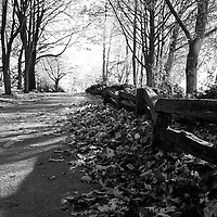A path with fallen autumn leaves.