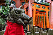 "Fox (kitsune) sculpture with red bib at Fushimi Inari Taisha, Shinto shrine, Kyoto, Japan. Foxes (kitsune), regarded as messengers, are often found in Inari shrines. Fushimi Inari Shrine (Fushimi Inari Taisha) is an important Shinto shrine. Bright vermilion Senbon Torii (""thousands of torii gates"") straddle a network of trails behind its main buildings. The trails lead into the wooded forest of the sacred Mount Inari (233 meters). Fushimi Inari is the most important of several thousands of shrines dedicated to Inari, the Shinto god of rice. Foxes are thought to be Inari's messengers, honored in many statues. The shrine predates the capital's move to Kyoto in 794. The torii gates are donated by individuals and companies, as inscribed on the back of each gate. Prices for small to large gates run from 400,000 to over one million yen."