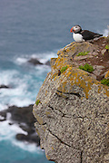 An Atlantic puffin (Fratercula arctica) rests on a ledge high above the Atlantic Ocean on the Látrabjarg bird cliff in Iceland. Látrabjarg is Europe's largest bird cliff, 14 km (8.7 miles) long with a height of up to 440 meters (1444 feet).