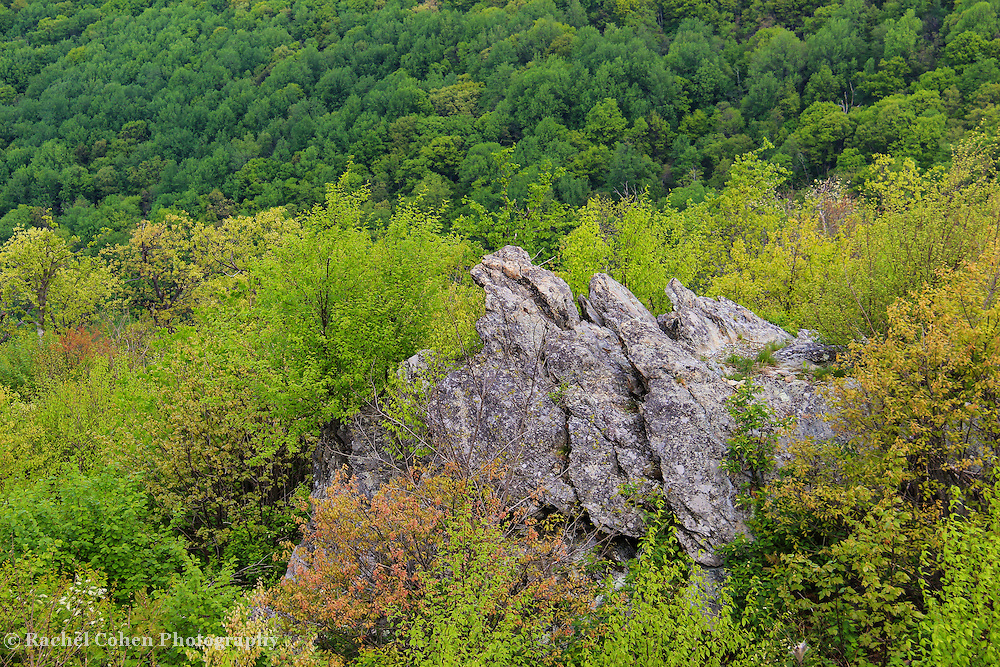 &quot;Rocky Mountain spring&quot;<br /> <br /> Beautiful large jagged boulders stand tall among spring's new vegetation, with a backdrop of green trees on a mountainside!!<br /> <br /> The Blue Ridge Mountains by Rachel Cohen