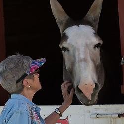 052817 - Barns & Stalls