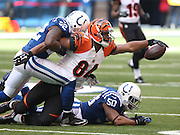Bengal tight end Jermaine Gresham reaches for a first down in the second quarter as Colts defenders D'Qwell Jackson and Jerrell Freeman try to stop him. Indianapolis hosted Cincinnati at Lucas Oil Stadium Sunday, October 19, 2014.