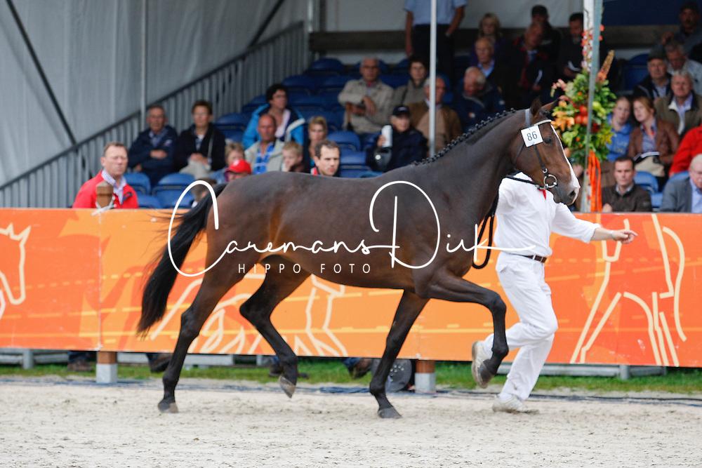 86 - Dalentine<br /> KWPN Paardendagen 2011 - Ermelo 2011<br /> © Hippo Foto - Leanjo de Koster