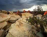 Storm over Schnebly Hill red rocks with a twisting juniper growing out of from crack in Coconino Sandstone in foreground, Coconino National Forest, AZ