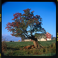 Horse Farm off Deer Park Road, Finksburg, MD