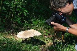 Rafelige parasolzwam, Macrolepiota excoriata