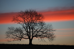 © Licensed to London News Pictures. 05/03/2014. Butser Hill, Hampshire, UK. The silhouette of a tree at dawn and a strip of cloud illuminated red from the rising sun, today 5th February 2014. Photo credit : Rob Arnold/LNP