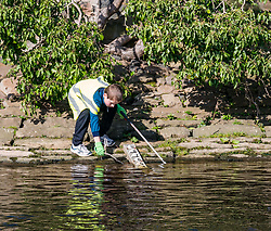Pictured: Water of Leith Spring clean, Edinburgh, Scotland. 31 March 2019. A group of volunteers does a n annual Spring clean along a section of the banks of the Water of Leith which runs through Edinburgh, organised by the Water of Leith Conservation Trust. A young boy participates in the litter pick up.<br /> Sally Anderson | EdinburghElitemedia.co.uk<br /> Reproduction fee payable to Edinburgh Elite Media