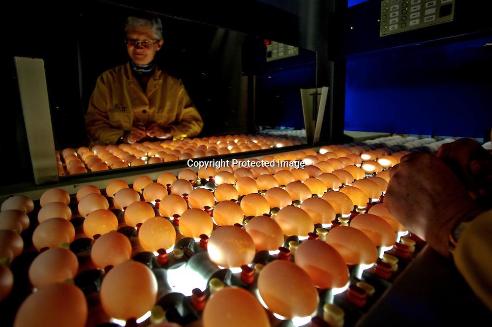 26032009, Totenvika. EGGLYS: Marit Dahl på Toten eggpakkeri gjennomlyser daglig dusinvis av egg for å sortere ut de med indre kvalitetsfeil. ..Foto: Daniel Sannum Lauten/VG