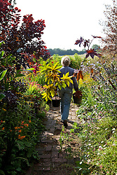 Carol Klein with large pots of Ricinus communis ready to place in border. Castor oil plant