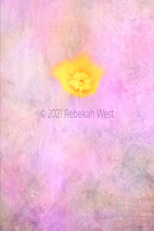 melting vivid yellow flower centered in top half of vertical watercolor pastel field of pink white peach white red violet grey gray, flower center soft focus petals blurred out, flower art, feminine, high resolution, licensing, iridescent, 3547 x 5321