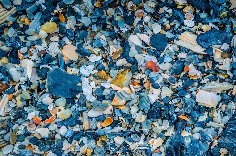 Seashells lay on Folly Beach, Oct. 12, 2015, in Folly Beach, South Carolina. (Photo by Carmen K. Sisson/Cloudybright)