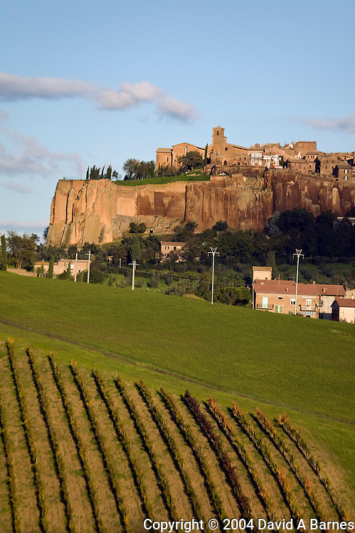 Orvieto, vineyard, Umbria, Italy