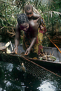 Africa, Democratic Republic of the Congo, Ngiri River area, Libinza tribe. Woman carrying baby in canoe, removing fish caught in net in swamp forest.