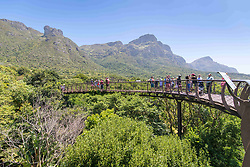 January 4, 2018 - Cape Town, Western Cape, South Africa - Treetop view of the Centenary Tree Canopy Walkway at the Kirstenbosch Botanical Gardens in Cape Town, South Africa (Credit Image: © Edwin Remsberg / Vwpics/VW Pics via ZUMA Wire)