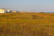 Beach development, shoreline development, beach houses, healthy vegetation, Galveston, Texas, Texas coast.