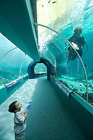 A young boy watches a scuba diver clean the world's largest coral reef aquarium at Reef HQ.