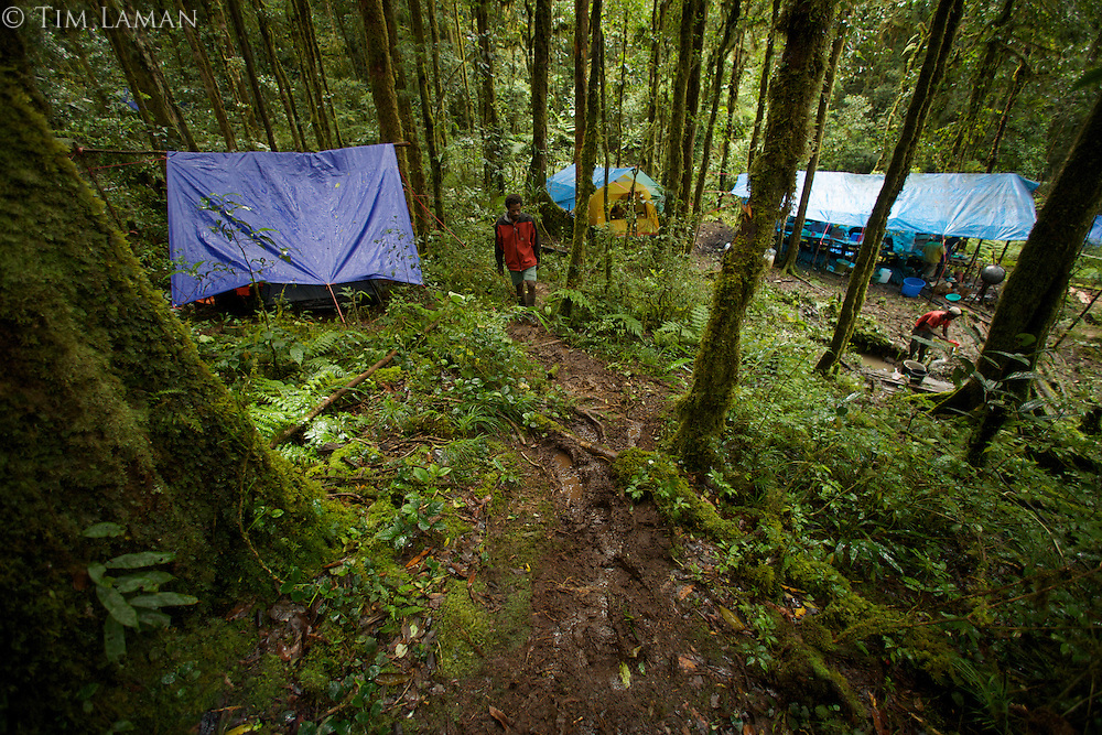 """View of the main camp site known as """"Bog Camp"""" in the Foja Mountains - base of operations for the CI RAP expedition to the Foja Mts in 2008.<br />Field assistant Bastian Tawane walks up path."""