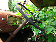 An interior shot of an abandoned truck showing the rusty dashboard and a salmon berry bush that has taken root in the cab. Kestner Homestead, Olympic National Park.