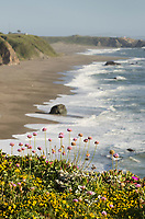 Wildflowers on bluff edge, Sonoma Coast State Park, California