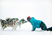 Dogsledding in winter storm, Minnesota