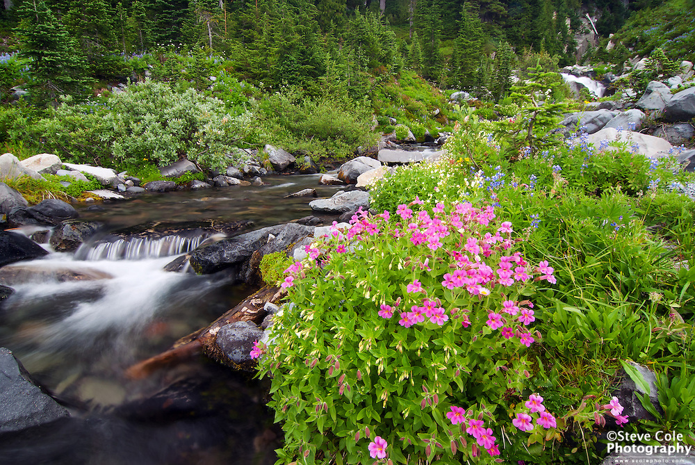 Paradise River - Mount Rainier National Park