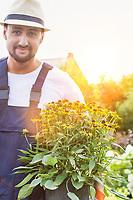 Portrait of mature gardener holding daisy flower on pot in shop