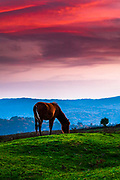 A horse grazing at green meadow at dusk