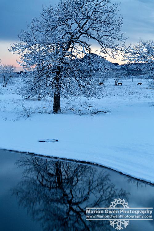 Snowy cottonwood tree reflects on Olds River, Kodiak, Alaska
