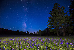 """Milky Way Above Sagehen Meadows 3"" - Photograph of the Milky Way and other stars above a field of Camas wildflowers at Sagehen Meadows, near Truckee, California."