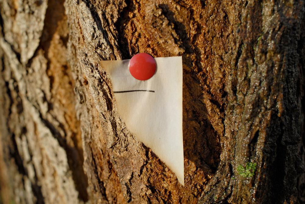 Reisszwecke haelt den Rest eines abgerissenen Blattes, das an einen Baum geheftet wurde.   | A red pin holds  a torn paper on a tree |