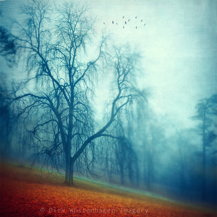 Silent foggy morning in a par. Texturized photograph<br /> <br /> Prints &amp; more: &quot;http://society6.com/DirkWuestenhagenImagery/Slice-of-Silence_Print#1=45&quot;&gt;