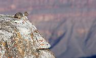US-GRAND CANYON: The Grand Canyon. PHOTO: GERRIT DE HEUS