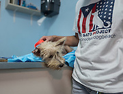 Just rescued from Guayanes Beach, Puerto Rico, Scrappy awaits her first medical exam at the Mi Mascota clinic in Puerto Rico.