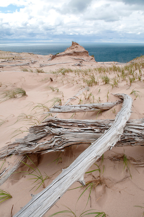The remains of trees killed by the constantly shifting sands of Sleeping Bear Dunes National Lakeshore, Michigan.