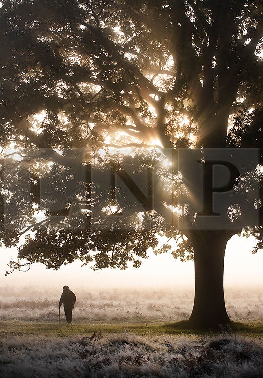 © Licensed to London News Pictures. 09/11/2019. London, UK. A man walks through a cold and frosty Bushy Park in south west London. A cold spell is forecast in parts of the United Kingdom. Photo credit: Peter Macdiarmid/LNP