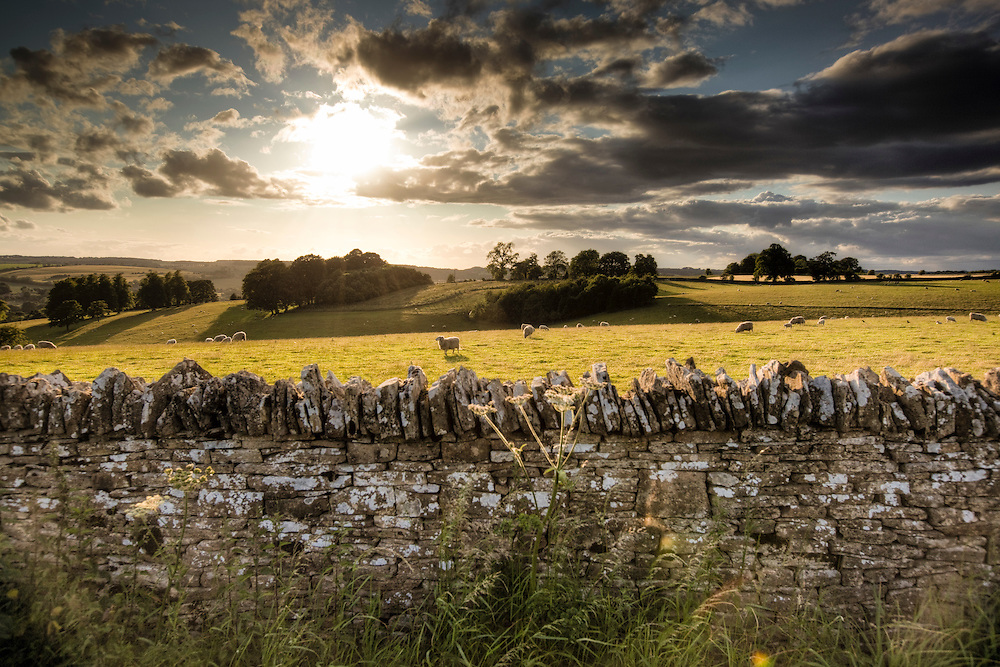 Stone wall and sheep in a Cotswold landscape